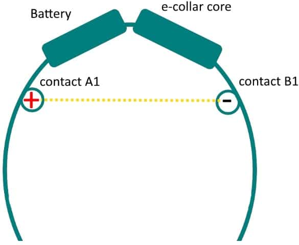 Chameleon E-collar electrical flow with 2 contact points